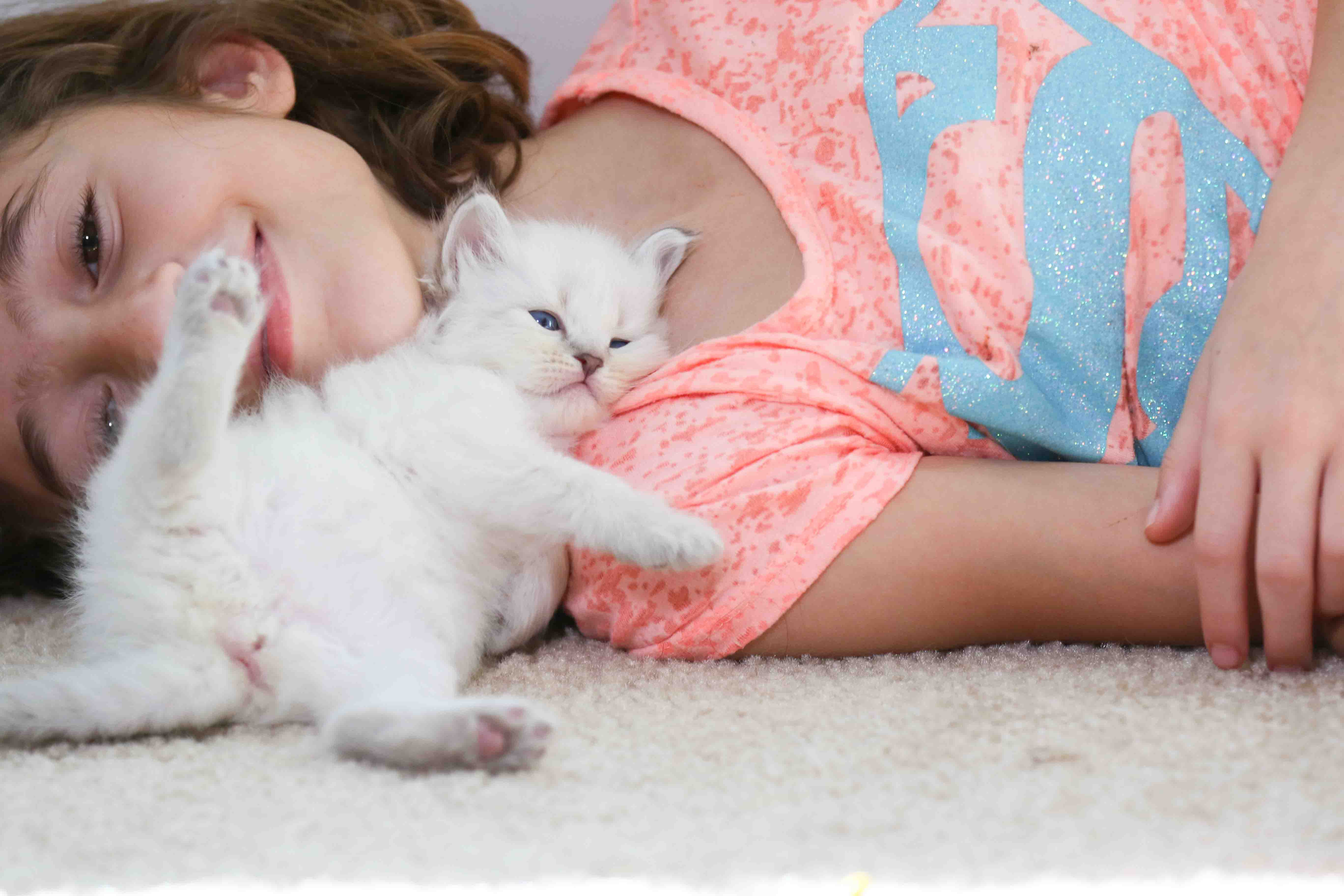 VirginiaKittens – Siberian Cats in Virginia